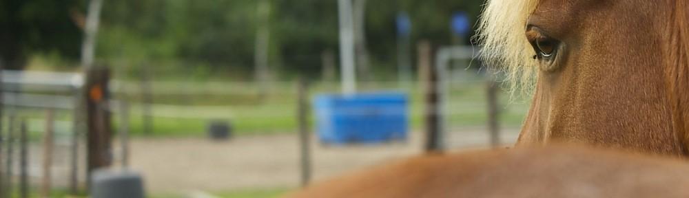 paardenblik05