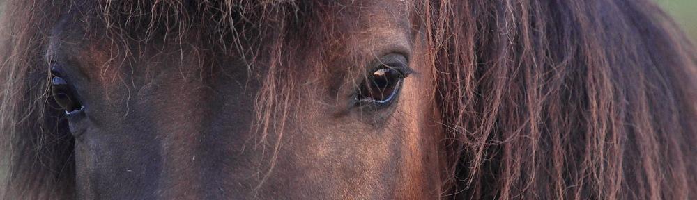 Welkom bij Coaching de Paardenblik